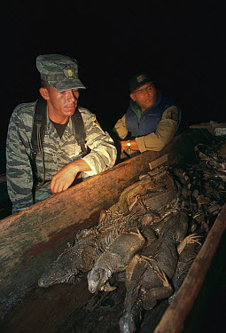 Game wardens with confiscated boat full of iguanas that were poached for sale as bush meat, Barro Colorado Island, Panama  -  Christian Ziegler
