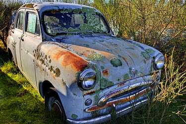 Abandoned car covered in lichen and rust, Canterbury, New Zealand  -  Colin Monteath/ Hedgehog House
