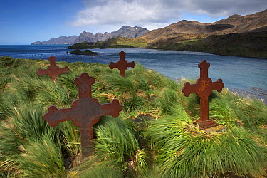 Old cemetery during high winds, Prince Olav Harbour, South Georgia Island  -  Ingo Arndt