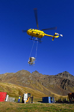 Helicopter flying with bait bucket for South Georgia Heritage Trust Rat Eradication Project, Grytviken, South Georgia Island  -  Ingo Arndt