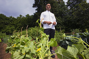 President Obama's personal chef Sam Kass in Michelle Obama's vegetable garden, White House, Washington D.C.  -  Mark Moffett