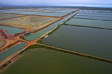 Shrimp farm that used to be a mangrove forest, north of Dangriga, Belize  -  Christian Ziegler