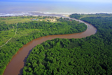 River with sediments caused by erosion due to deforestation for oil palm plantations, Niah National Park, Sarawak, Malaysia  -  Christian Ziegler