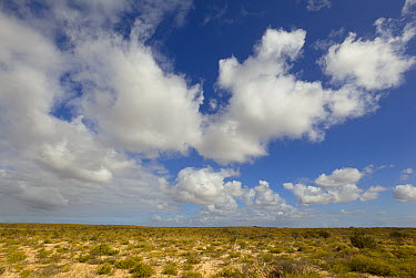 Cumulus clouds above desert, Kalbarri National Park, Western Australia, Australia  -  Yva Momatiuk & John Eastcott