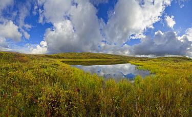 Tundra pond, Denali National Park, Alaska  -  Yva Momatiuk & John Eastcott