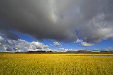 Tundra pond under overcast skies, Denali National Park, Alaska  -  Yva Momatiuk & John Eastcott