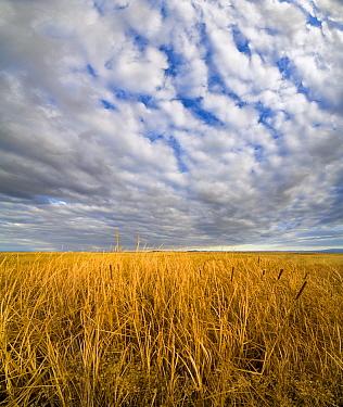 Tall prairie grasses and dark clouds, Malheur National Wildlife Refuge, eastern Oregon  -  Yva Momatiuk & John Eastcott