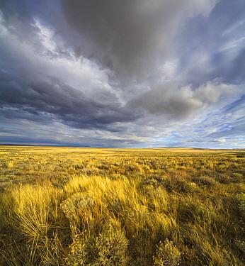 Cumulus clouds over prairie, Hart Mountain National Wildlife Refuge, Oregon  -  Yva Momatiuk & John Eastcott