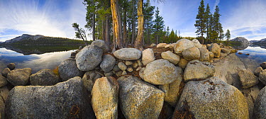 Coniferous trees and massive boulders along Tenaya Lake, Yosemite National Park, California  -  Yva Momatiuk & John Eastcott