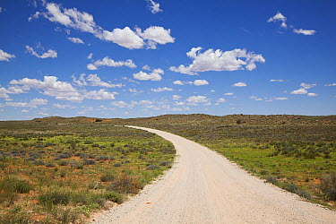 Gravel road, Kalahari, Northern Cape, South Africa  -  Richard Du Toit