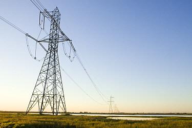 Powerlines, Jepson Prairie Preserve, Solano, California  -  Sebastian Kennerknecht