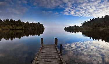 Dock in Lake Mapourika with mist rising off water, Westland National Park, New Zealand  -  Colin Monteath/ Hedgehog House