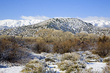 Scissor's Crossing, looking west to the Laguna Mountains with a dusting of snow, Anza-Borrego Desert State Park, California  -  Richard Herrmann
