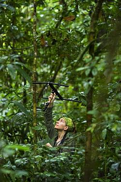 White-taile Titi (Callicebus discolor) biologist, Amy Porter, radio tracking individual, Tiputini Biodiversity Station, adjacent to Yasuni National Park, Amazon Rainforest, Ecuador  -  Pete Oxford