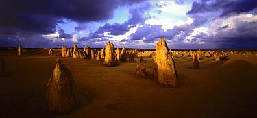 Pinnacles, Nambung National Park, Australia  -  Michaell Jensen/ Auscape