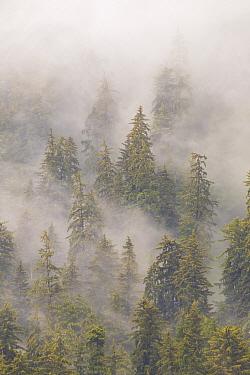 Mist in Tongass National Forest, Juneau, Alaska  -  Matthias Breiter