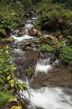 River within the Junin Community Reserve with small cascades, Intag Valley, northwest Ecuador  -  Pete Oxford