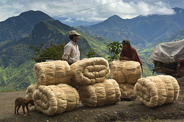 Sisal rope waiting for transport into town, San Antonio, Intag Valley, northwest Ecuador  -  Pete Oxford
