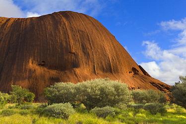 Ayers Rock with vegetation after heavy rains, Uluru-kata Tjuta National Park, Northern Territory, Australia  -  Yva Momatiuk & John Eastcott