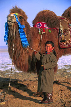 Bactrian Camel (Camelus bactrianus) and young girl, Gobi Desert, Mongolia  -  Pete Oxford
