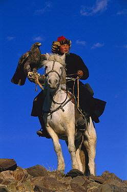 Golden Eagle (Aquila chrysaetos) and Kazakh on horse at second annual eagle festival, Mongolia  -  Pete Oxford