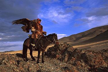 Golden Eagle (Aquila chrysaetos) and Kazakh on horse at festival, Mongolia  -  Pete Oxford