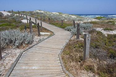 Boardwalk through coastal dunes, Asilomar State Beach, Pacific Grove, California  -  Norbert Wu
