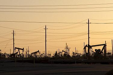 Oil rigs near Bakersfield, southern California  -  Norbert Wu