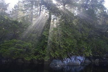 Sunlight streaming through morning fog along coast, Vancouver Island, British Columbia, Canada  -  Norbert Wu