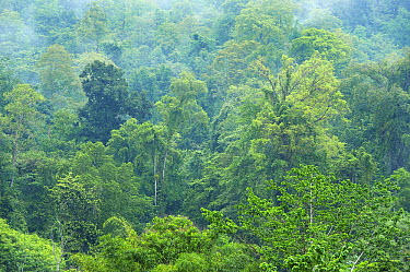 Tropical rainforest on Mount Tompotika, central Sulawesi, Indonesia  -  Kevin Schafer