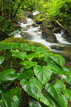 Small stream in rainforest, Mount Tompotika Forest Reserve, Tompotika Peninsula, central Sulawesi, Indonesia  -  Kevin Schafer