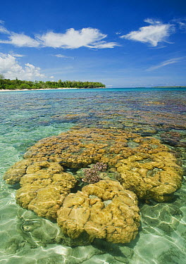 Coral reef, Tompotika Peninsula, central Sulawesi, Indonesia  -  Kevin Schafer