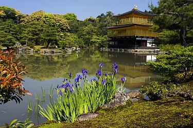 Kinkaku-ji Temple and pond, Kyoto, Japan  -  Hiroya Minakuchi