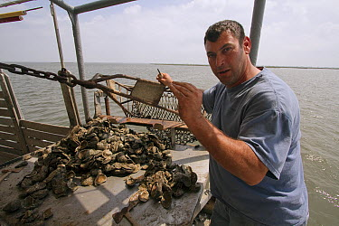 Fisherman, Nick Collins, with oyster harvest one year after BP disaster, only a few are alive out of 2,000 bivalves, Louisiana  -  Gerry Ellis