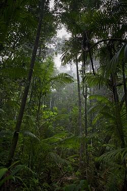 Lowland rainforest, Sipaliwini, Surinam  -  Piotr Naskrecki