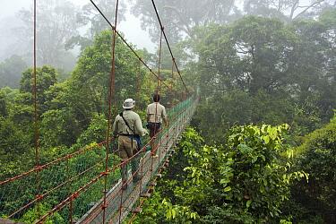 Tourists on canopy walkway, Danum Valley Conservation Area, Malaysia  -  Suzi Eszterhas