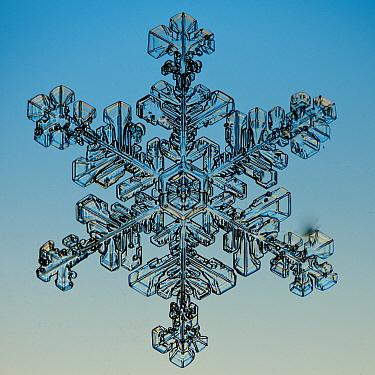 Snowflake seen through microscope  -  Steve Gettle
