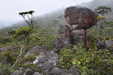 Sandstone boulders on summit plateau of Gunung Murud, Sarawak, Borneo, Malaysia  -  Ch'ien Lee