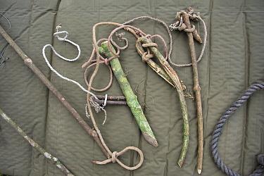 Chimpanzee (Pan troglodytes) snares recovered by anti-poaching team, western Uganda  -  Suzi Eszterhas