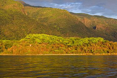 Deciduous forest on shore of Lake Tanganyika, Mahale Mountains National Park, Tanzania  -  Konrad Wothe