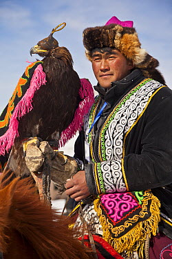 Golden Eagle (Aquila chrysaetos) used for hunting, with Kazak handler competing at winter festival, Mongolia  -  Colin Monteath/ Hedgehog House