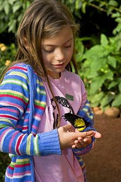 Swallowtail (Papilionidae) butterfly on girl's hand, Tucson Botanical Gardens, Tucson, Arizona  -  Tom Vezo