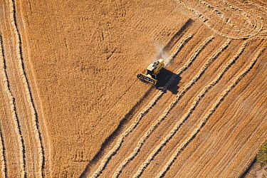 Combine harvester working field, Western Cape, South Africa  -  Richard Du Toit