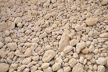 Limestone rocks in dry river bed, Hawf Protected Area, Yemen  -  Sebastian Kennerknecht