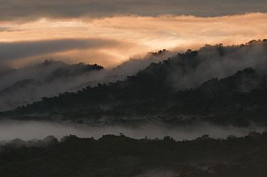 Cloud forest, Cayambe Coca Ecological Reserve, Ecuador  -  Murray Cooper