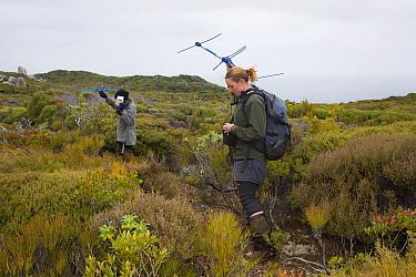 Kakapo (Strigops habroptilus) researchers tracking bird with radio telemetry, Codfish Island, New Zealand  -  Stephen Belcher