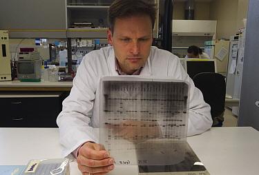 Kakapo (Strigops habroptilus) researcher reviewing genetic sequence, Dunedin, Otago, New Zealand  -  Stephen Belcher