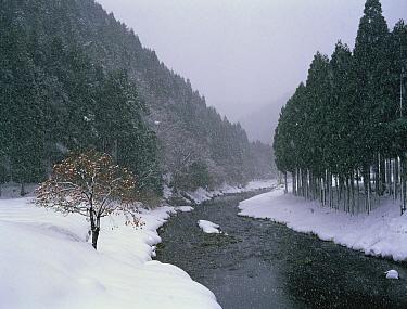 Snow falling on a stream, Shiga, Japan  -  Shigeki Iimura/ Nature Productio