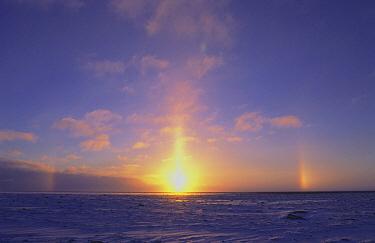 Parhelion/ Sundog, an atmospheric phenomenon over a snowy field  -  Toshiji Fukuda/ Nature Productio