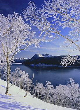 Rime ice on trees around, Lake Mashu, Hokkaido, Japan  -  Masami Goto/ Nature Production